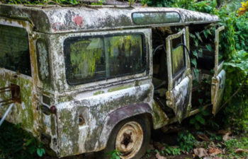 CAMEROON | THE INVISIBLE TREES OF BAMENDA