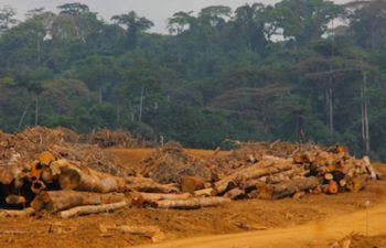 Cameroon | Fighting the Devils' Land Grab Pact
